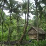 Preprosto domovanje v naravi